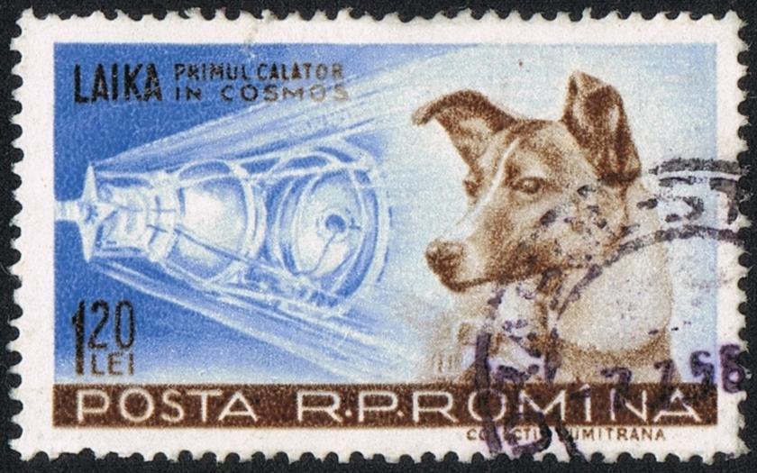 Video: Sovětský vesmírný pes Lajka