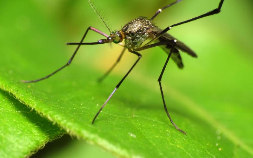 Případy viru Zika v Singapuru zaznamenaly raketový růst