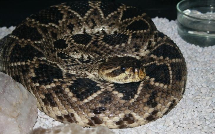 Hadí poplach v internetové kavárně. Tohle video teď bourá rekordy