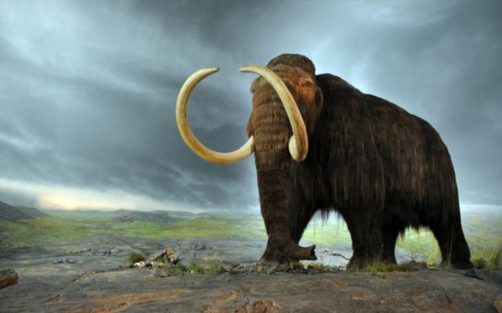Co se opravdu stalo mamutům a jiným obrům doby ledové? (2.)