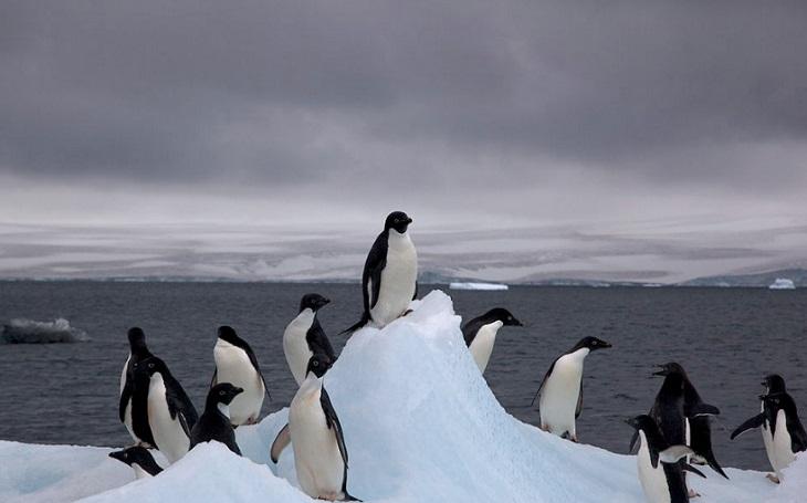 Ani bílá ani šedá. Globální oteplování změní barvu Antarktidy