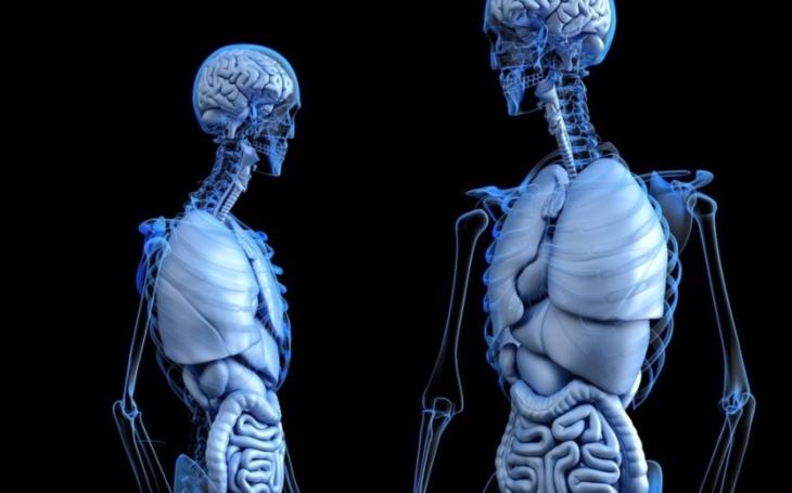 VIDEO: Unikátní ,,zombie projektor&quote; ukáže, jak pracují lidské svaly