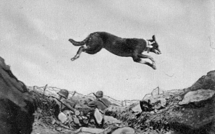 Třínohý pes zachránil francouzskou jednotku u Verdunu