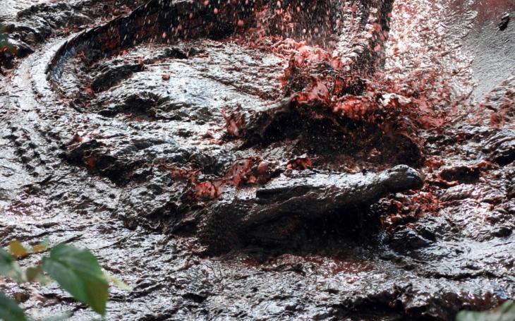 Nejrozsáhlejší útok krokodýlů v dějinách okusila japonská jednotka. Ústup přes mangrovníky doprovázely výkřiky a střelba