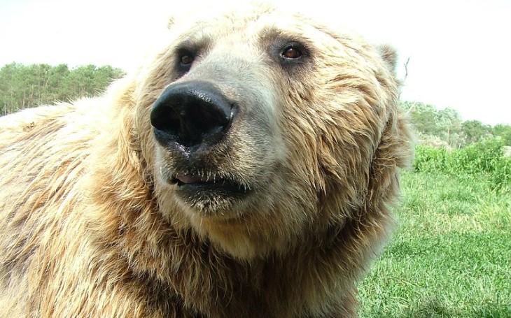 V autě vezl i vycpaného medvěda